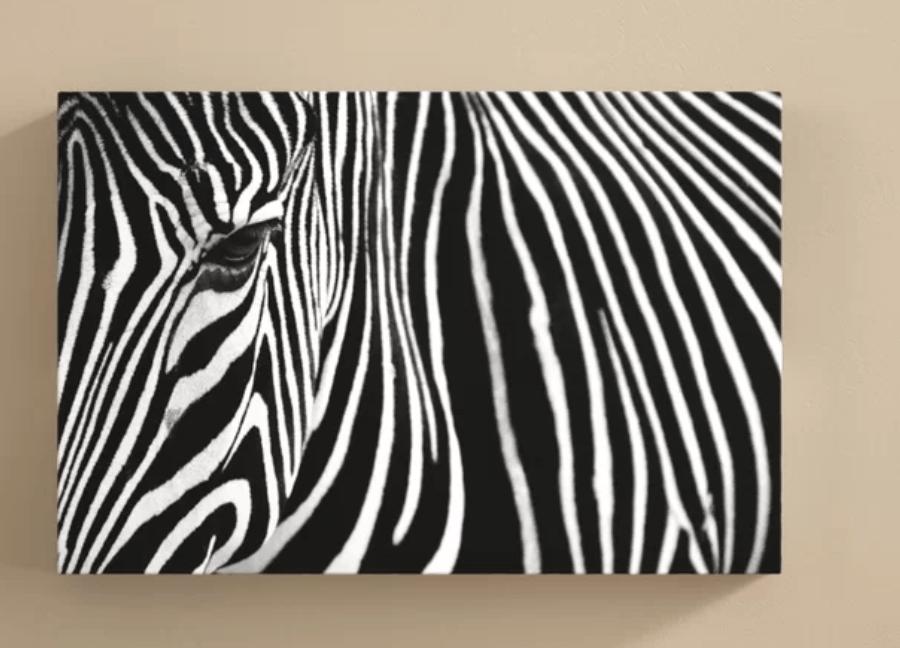 world-menagerie-zebra-in-lisbon-zoo-photographic-print
