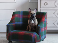 eastern-accents-dog-sofa