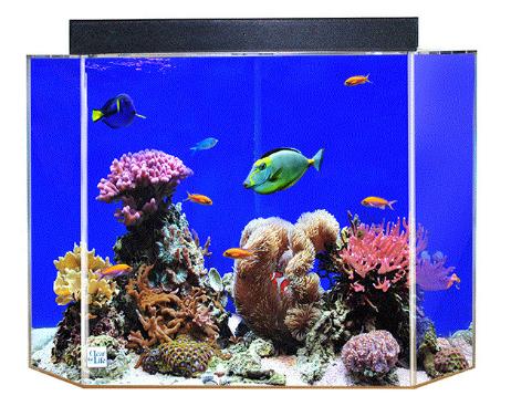 uniquarium-aquarium-tank